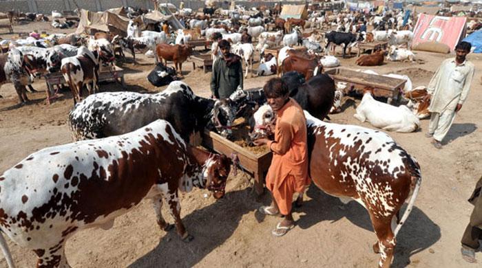 Congo Virus Symptoms in Pakistan