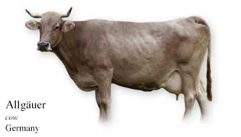 List of Cow Name with Picture