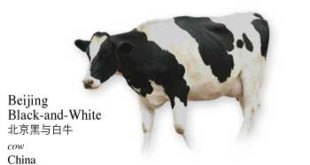 List of Chinese Cow Name with Picture