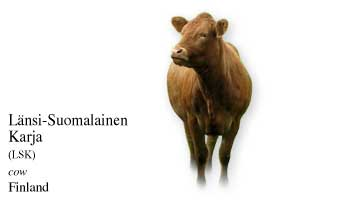 List of Finland Cow Name with Picture