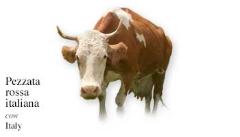 List of Italian Cow Name with Picture