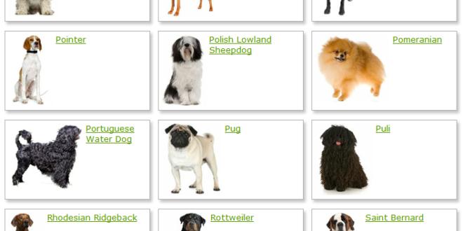 List of Dog Breeds