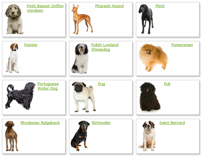 List of Dog Breeds